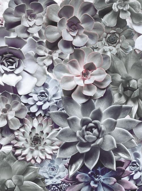 Wellness-Floral